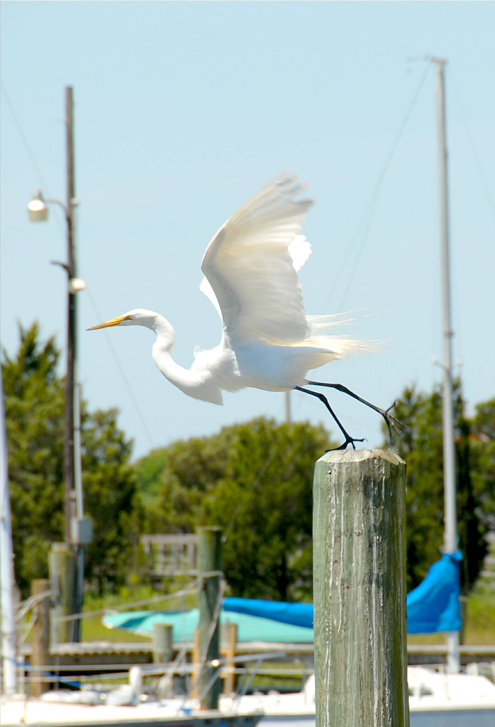 Bird Watching From Marinas