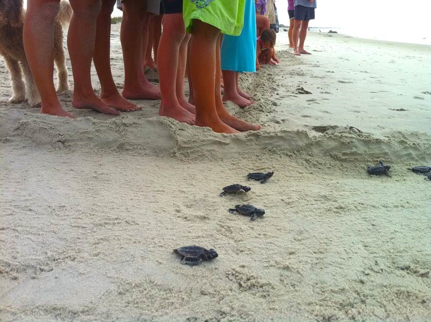 BHI Conservancy Turtle Watch