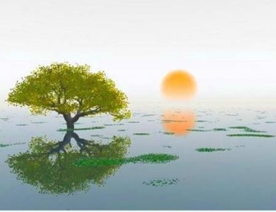 Island Healing Chiropractic Massage and Wellness Center